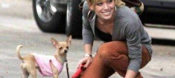 Беременная Хилари Дафф всю ночь просидела над больной собакой
