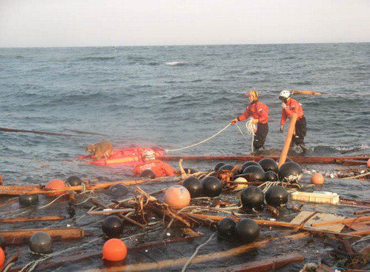 Японская береговая охрана спасает собаку, пережившую землетрясение, и проведшую три недели в море
