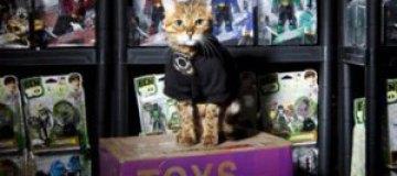 В Великобритании бенгальская кошка будет охранять склад игрушек