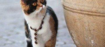По Одессе гуляет кошка в драгоценностях