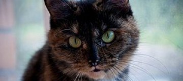 В Красноярске появился прокат кошек