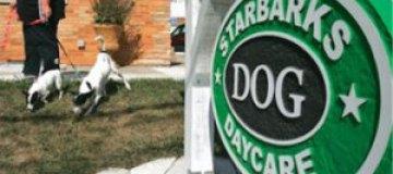 Starbucks попросил собачий приют отказаться от похожего названия