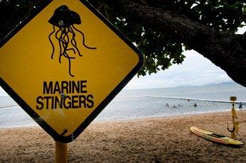 Пляжи Квинсленда и островов Тиви (Австралия): ядовитые кубомедузы