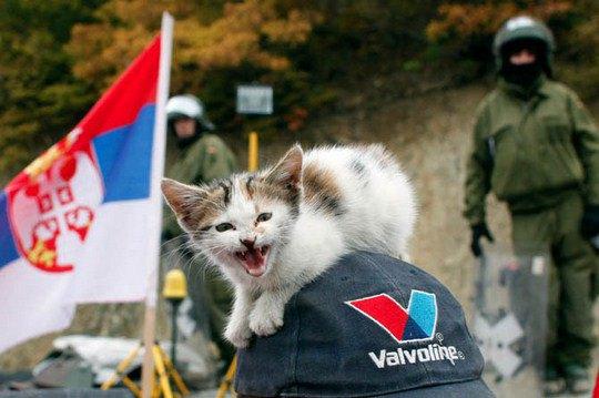 Котенок на кепке серба перед немецкими солдатами в поселке Ягненица, Сербия