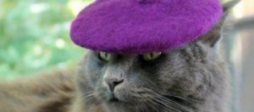 Кошачья шляпная мода