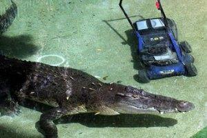 Крокодил Элвис украл газонокосилку у сотрудника зоопарка