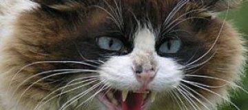 Приставы выселили из общежития кота с трудным характером