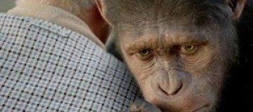 """Японским макакам показали """"Восстание планеты обезьян"""""""