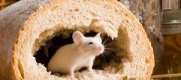 Австралийка нашла в батоне живую мышь