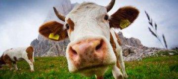 Животные в объективе фотокамер