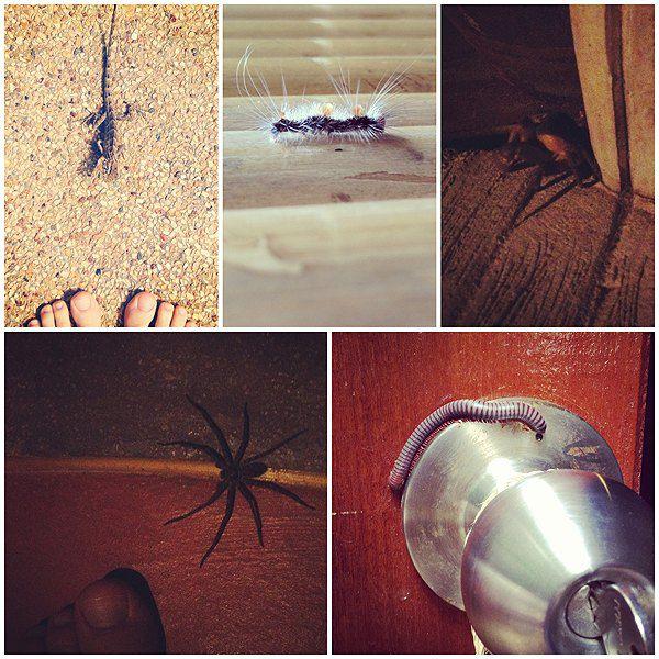 Певица в Таиланде делила комнату с вараном, а подушку с пауком