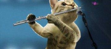 Коты-музыканты
