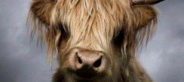 Портреты животных-аристократов от Дэвида Бони