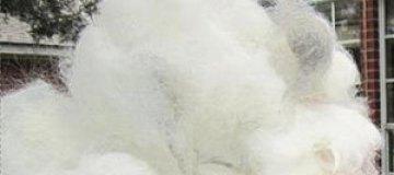 В Техасе скатают гигантский шерстяной комок