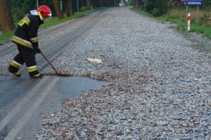 Польское шоссе засыпало сардинами