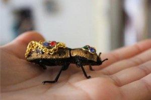 В Мексике живых жуков носят в качестве украшений