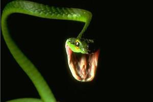 Любитель экзотики потерял змею в московском поезде
