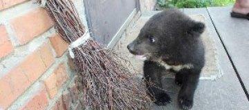 Новорожденному гималайскому медвежонку не могут подобрать имя