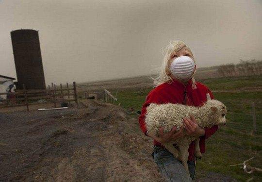 Девочка спасает ягненка с фермы недалеко от деревни в Исландии