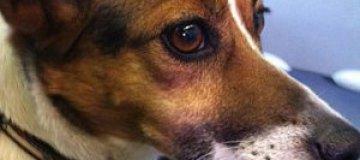 Пользователи Twitter помогли потерявшемуся псу вернуться домой