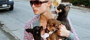 Пэрис Хилтон накормила бродячего пса в ресторане