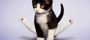 Щенки и котята занялись йогой