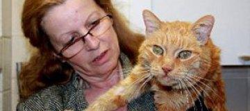 Кот вернулся к своей хозяйке спустя 16 лет