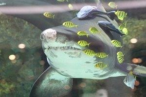 Киевская акула переехала в Германию и сменила имя