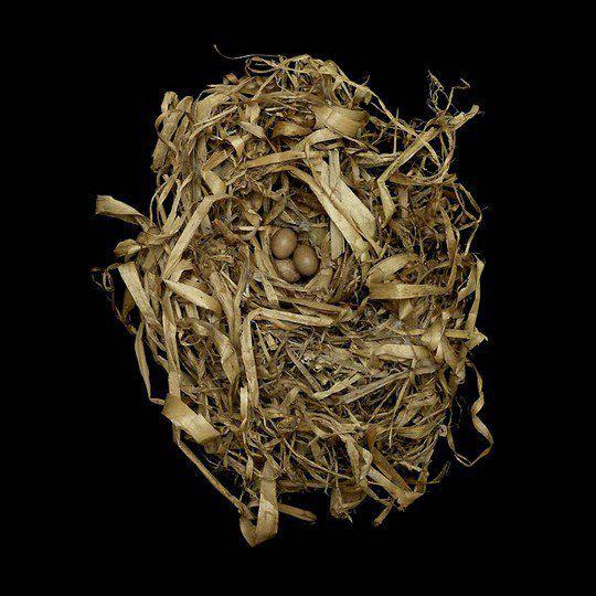 Гнездо болотного крапивника