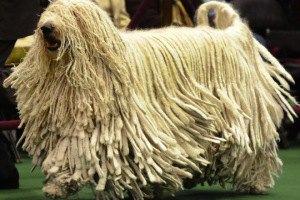Самые смешные собаки Нью-Йоркского дог-шоу