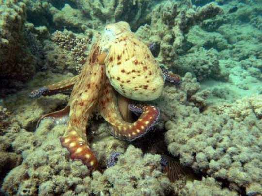 6 место - осьминоги
