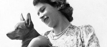 Умер последний чистокровный корги Елизаветы II