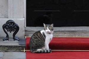 Коту Ларри перекрыли путь в британское министерство иностранных дел