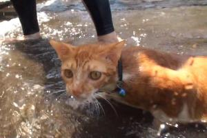 Бесстрашный кот Нео научился плавать в океане