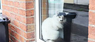 На кота, похожего на Гитлера, напали на улице