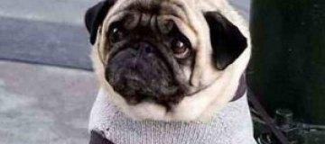Самый грустный в мире пес