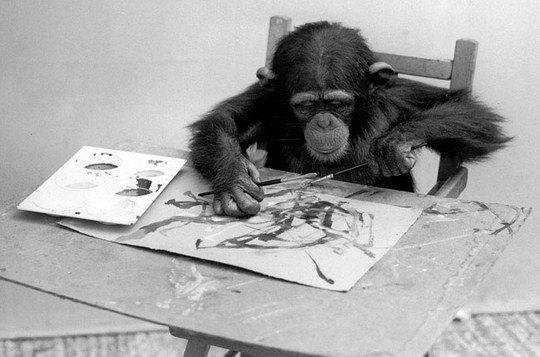 Шимпанзе Конго