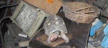 Пропавшая 30 лет назад черепаха нашлась в кладовке