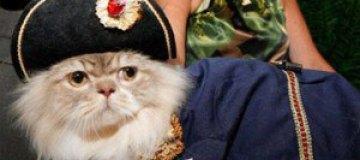 В Британии вошли в моду коты-пираты