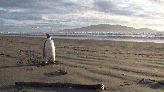 Хэппи Фита нашли на пустынном пляже