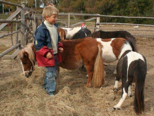Шетландские пони - очень преданные и добрые лошадки