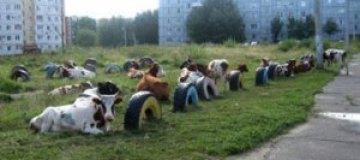 В России коровы пытались сорвать школьную линейку