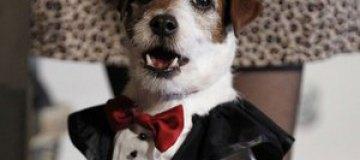 В Голливуде вручили кинопремию для собак