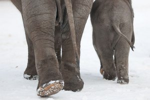Слоны отогрелись в Сибири двумя ящиками водки