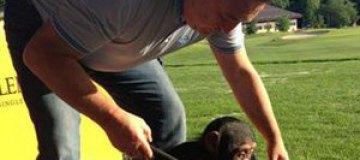 Фельдман обучал свою обезьянку игре в гольф