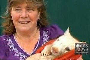Австралийка спасла белого вомбата от голодной смерти