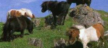 Брэд Питт купил шесть пони для всех своих детей