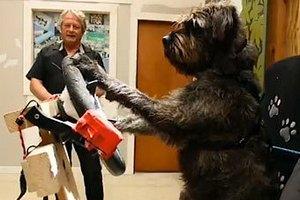Австралийский приют научил псов вождению