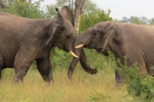 В Таиланде украинцу на голову свалился 2-тонный слон