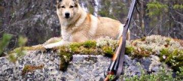 В России охотничья собака застрелила водителя